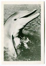 1960s Vintage Studio Fan Photo Card: FLIPPER