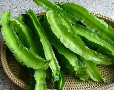BEAN 'Winged' 10 seeds asian vegetable garden goa HUMID asparagus pea UNUSUAL