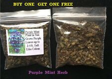 Buy 1 Get 1 Free Purple Mint Herb Plant Over 500 + Seeds 4 U