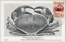 63609  -  NETHERLANDS - POSTAL HISTORY: MAXIMUM CARD 1974 -  CRAB Marine Animals
