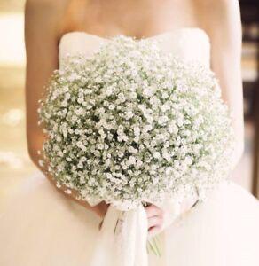 Fresh Wedding Flowers,Gypsophilia Bride,maids,Bouquets,Buttonholes,Pew ends