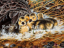 "Canada Goose 8x10 Art Print Goslings Detail ""Guarded Moment"" by Roby Baer PSA"