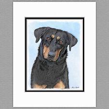 Beauceron Dog Original Art Print 8x10 Matted to 11x14