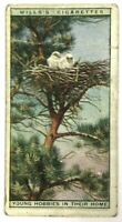 Wills's Cigarettes Young Hobbies Home 24 Life In Tree Tops Imperial Tobacco Card