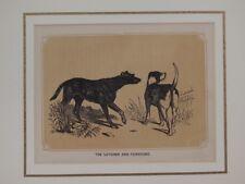 LEVRIERO FOXHOUND LURCHER INCISIONE LITOGRAFIA CANE 1860 CIRCA PASSEPARTOUT DOG