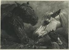 ANTIQUE EQUESTRIAN ARABIAN HORSE MOURNING DOVE SCANTY MEAL J F HERRING OLD PRINT