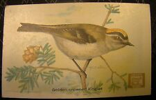 Useful Birds Of America Dwights Soda Card No. 4 Golden Crowned Kinglet