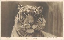 Postcard No 11 Tiger London Zoo Postcard   unposted