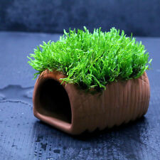 Flame Moss + Ceramic spawning cave - Aquarium Ornament Live plants fish tank