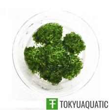 Riccia fluitans Tissue Culture Live Aquarium Carpet Plant Decoration java moss