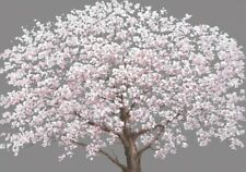 Cherry Blossom Tree Pink Canvas Print Art Painting Wall Home Decor Gift 70x100cm