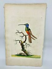 Harlequin Hummingbird - 1783 RARE SHAW & NODDER Hand Colored Copper Engraving