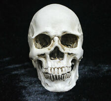 Realistic Human Skull Head Resin Halloween Haunt Stage Prop Decoration Medical