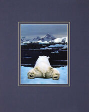 Art Wolfe dream of a Polar Bear Poster Art Print Picture 50x40cm-POSTAGE FREE