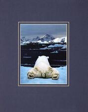ART WOLFE dream of a Polar Bear poster stampa d'arte immagine 50x40cm-porto franco