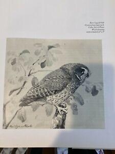 "Louis Agassiz Fuertes & The Singular Beauty of Birds, ""Bare-Legged Owl"" Print"