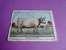 VACHES CHAROLAISE CHROMO CHOCOLAT PUPIER JOLIES IMAGES 1930
