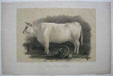 Originaldrucke (1800-1899) aus Afrika mit Zoologie