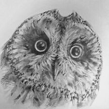 """Short Eared Owl - 5""""x 5"""" - Original Drawing on 150gsm paper (not a print)"""
