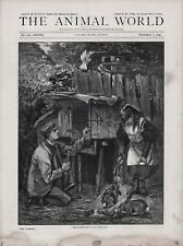 OLD RSPCA MAGAZINE 1886 PRINT MAN REPAIRING HUTCH GIRL PLAYING WITH RABBITS b14