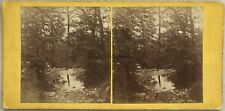 Paysage Fôret Sous Bois UK ? Photo Stereo Stereoview Vintage Albumine