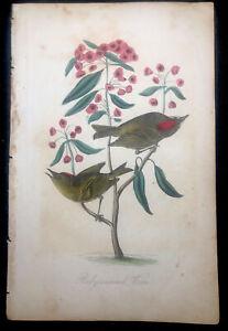 1839 RARE Antique ART PRINT Flowers Birds ALFRED ADLARD Hand Colored WREN NATURE