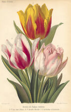 REVUE HORTICOLE Repro 1880s Flower Print Tulip Yellow Pink Matted in White