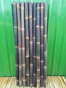 Bambusrohr Wulung Bambusstange Bambus Riesenbambus 1 x 8-9 cm x 2 m Wulung