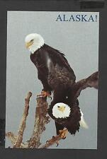 Colour Postcard Pair Bald Eagles Alaska unposted