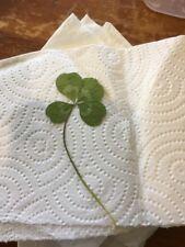 Real Genuine Four 4 Leaf Clover Lucky Charm