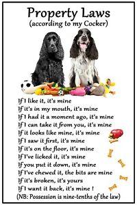 Cocker Spaniel B&W Dog Gift - Property Laws - Large Fun flexible Magnet 6 x 4 in