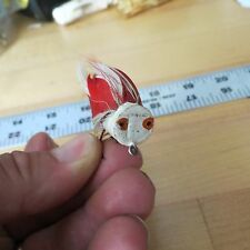 New listing Vintage Unknown Fly fishing lure (lot#11048)