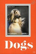 Afghan Hound Dog Stamp Sheet (2013 Uganda)