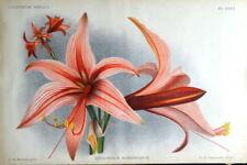 Lithograph Orange Art Prints