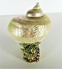 Large Turbo Marmoratus Carved Shell on Shell Stand
