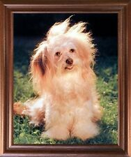 Havanese Cute Fluffy Dog Kids Room Decor Puppy Animal Wall Decor Framed Picture