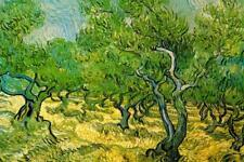 Vincent van Gogh Olive Orchard Mural - Poster 36x54 inch