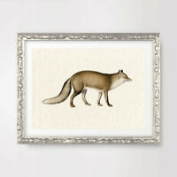 FOX ANTIQUE ANIMAL ILLUSTRATION ART PRINT Poster Decor Wall Picture A4A3A2 +++++