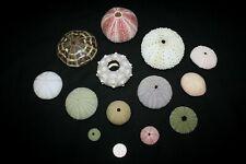13 pce Sea urchin shell selection