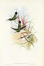 "1990 Vintage HUMMINGBIRD #215 ""GREEN THROATED FAIRY"" LOVELY GOULD Art Lithograph"