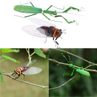 2pcs Realistic Insect Figurines   & Cicada Fridge Magnet Wall Hanging Art