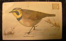 Useful Birds Of America Dwights Soda Card Second Series No. 7 Horned Lark