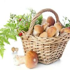 Funghi, spore e kit di piante semi e bulbi