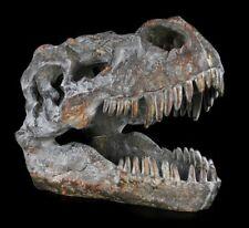 Calavera - Tiranosaurio Rex Pequeño - Calavera Esqueleto T-Rex FOSSIL Dinosaurio