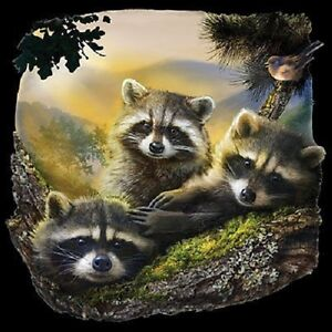 New Three Raccoons   Raccoon    Tshirt    Sizes/Colors