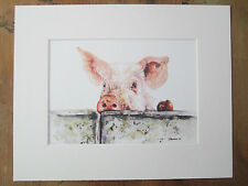 "Watercolour pig,  print, of original painting, in 10"" x 8"" Mount"