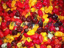 Chili, höllisch scharf: Wählen Sie aus über 50 Sorten Ihre Favoriten.
