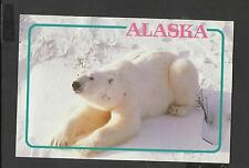 Colour Postcard  Alaskan Polar Bear on the Arctic Snow and Ice unposted