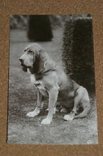 Vintage Postcard: Portait of a Bloodhound Dog, Valentines