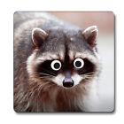 Raccoon Googley Eyes Animal Coaster 247